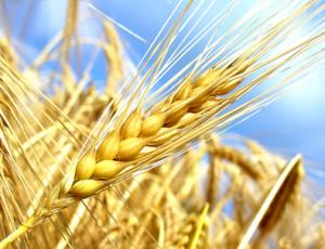 Getreide      © Rebel - Fotolia.com