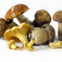 Pilze Genuss, oder Gefahr? © Aleksey Zakharov - Fotolia.com