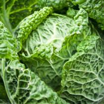 Wirsingkohl - grün und gesund