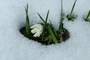 Frühling Enrico Kahnt pixelio.de