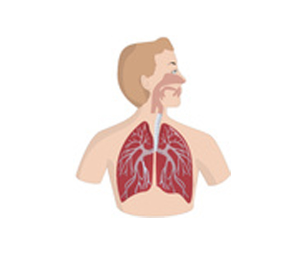 Nase,-Lunge,-Atemwege | ihre-gesundheit.tv