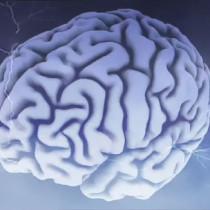Schlaganfall - Das Gehirn Detail