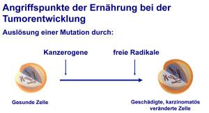 Ernährung & Tumorbildung