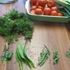 Kräuter & Tomaten
