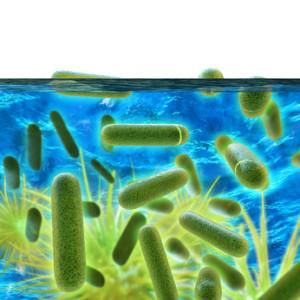 Legionellen - gefährliche Bakterien... © fotoliaxrender