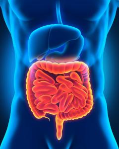 Darm und Darmbeschwerden